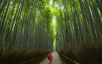 9D JAPAN ALPINE ROUTE